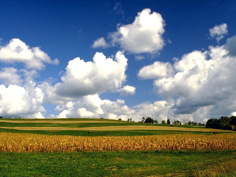 iowa-cornfields.jpg